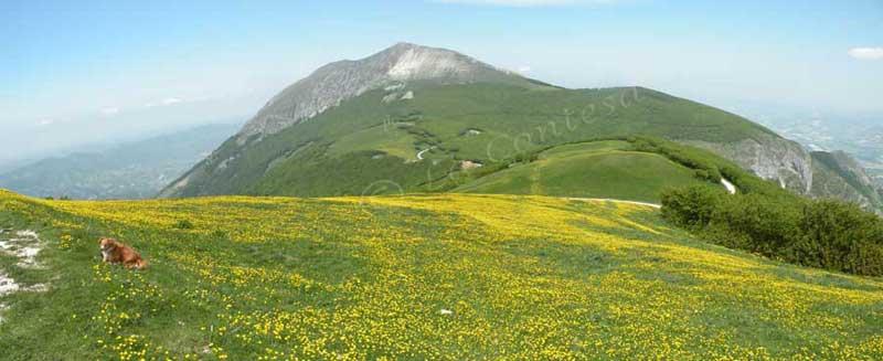 Primavera nel monte Acuto, Appennini di Pesaro Urbino.